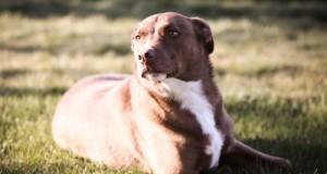 Wild Calling! makes Dogs Happy #TheArtofNutrition