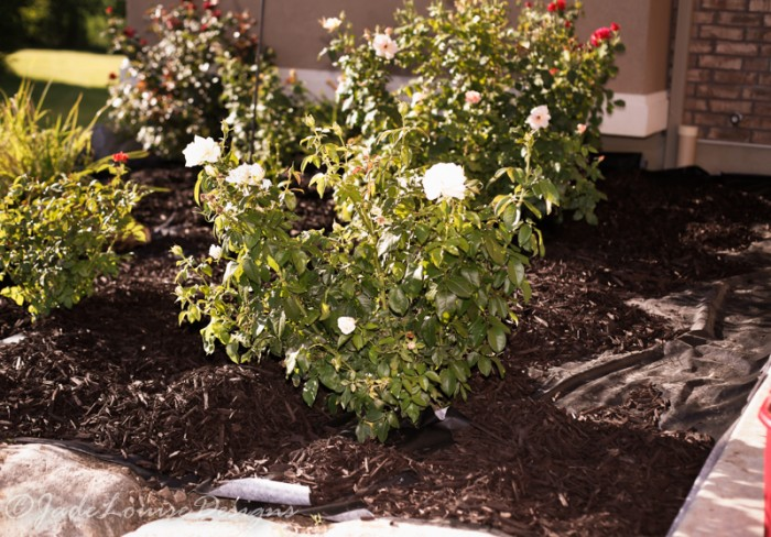 Landscaping Without Weed Barrier : Diy weed barrier for a beautiful garden bed