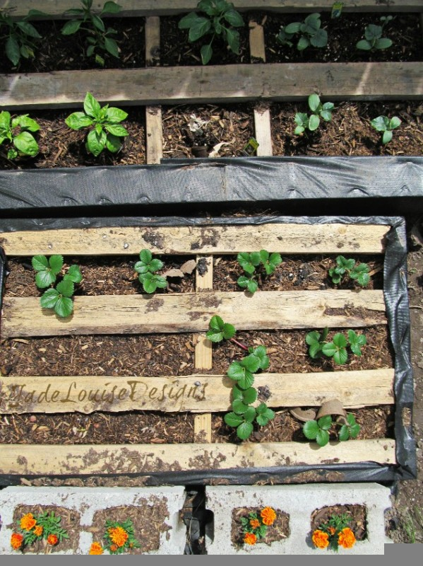 wooden planters for strawberries with Diy Pallet Garden on School Fruit Garden as well 473511348291272567 besides Vertical Herb Garden as well Pallet Strawberry Planter besides Vertical Pyramid Garden Planter Diy.