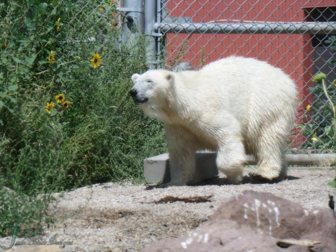 Utah's Hogle Zoo Family Destination Visit Salt Lake City #visitsaltlake