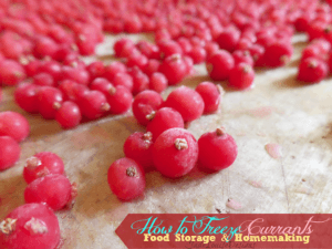 How to Freeze Currants for Year Long Use | Food Storage Series