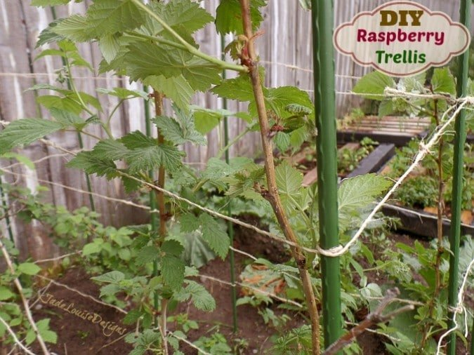 DIY Raspberry Trellis Support System for Gardening #MiracleGroProject