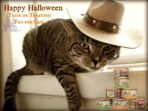 Helping Cats enjoy Halloween! Cat Trick or Treating with Sheba Cat Food