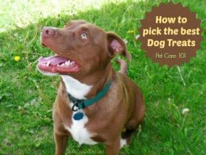 Dog Treats, How to pick the best Dog treats for your best friend. Pet care 101.