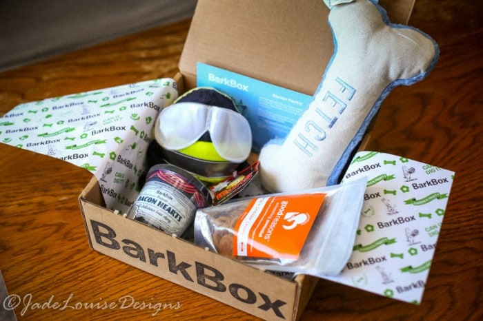 Keep Puppy Involved in Summer fun with BarkBox #BarkBoxDay