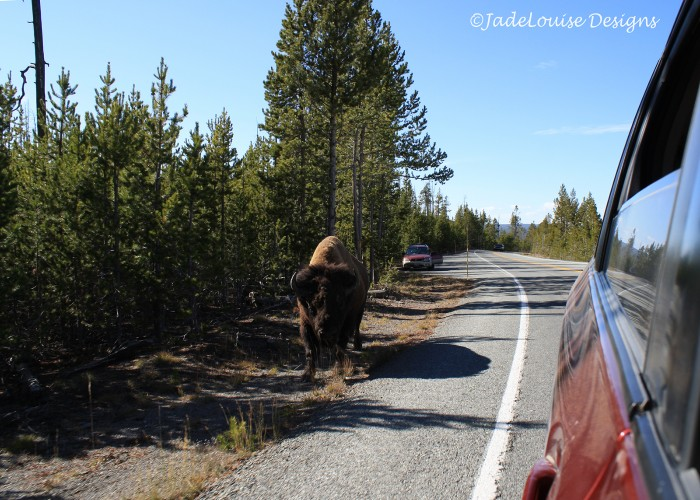 Stay a safe distance away from wildlife in national parks