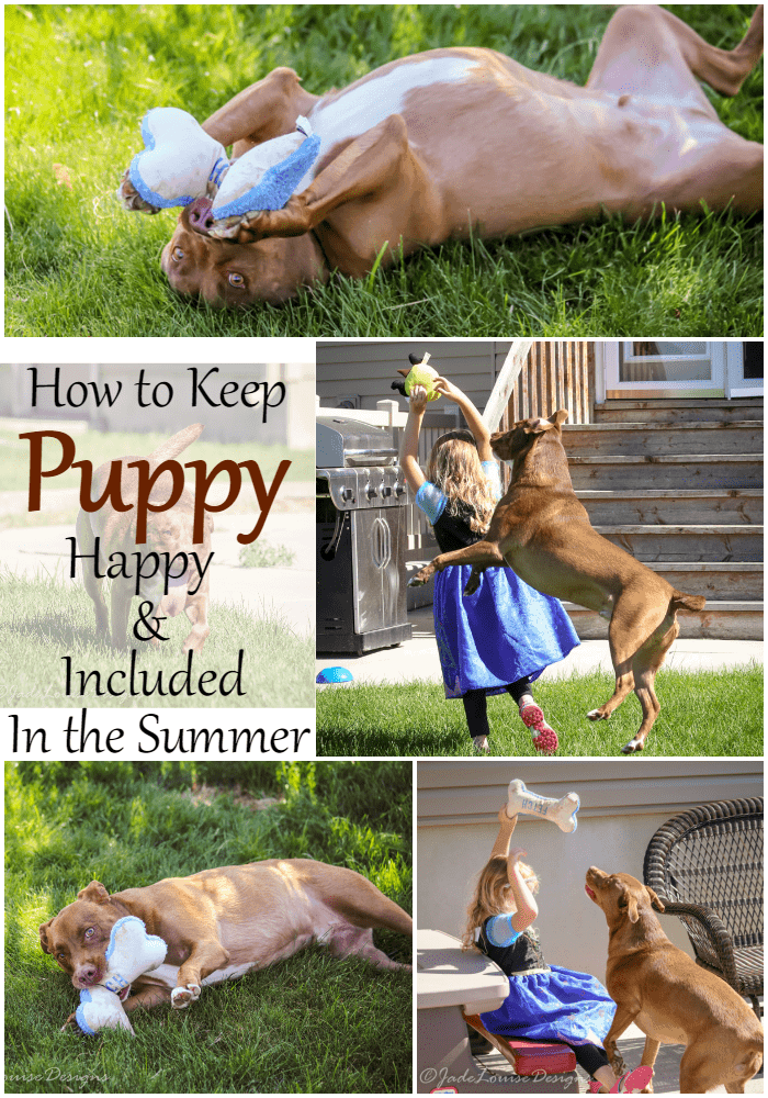 Keep Puppy Involved in Summer fun with BarkBox #BarkBoxDay