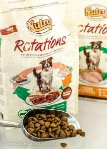 Adding Variety to Dog's Dinner Time with Natural Dog Food