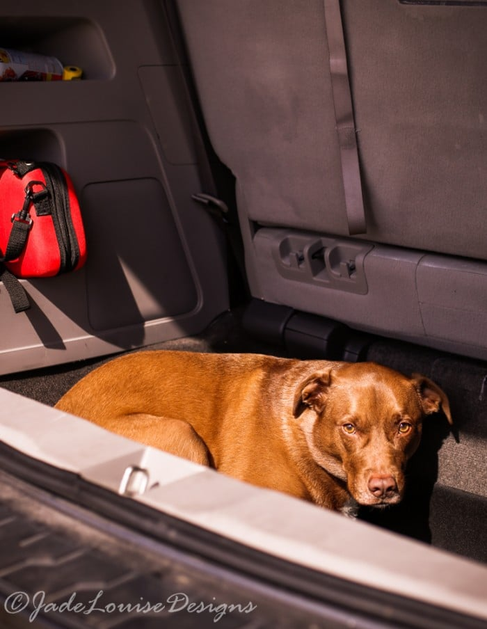 Dog Travel Tips for the Holidays