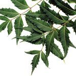 The Many Uses of Neem
