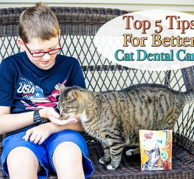 Top Five Tips for Cat Dental Care