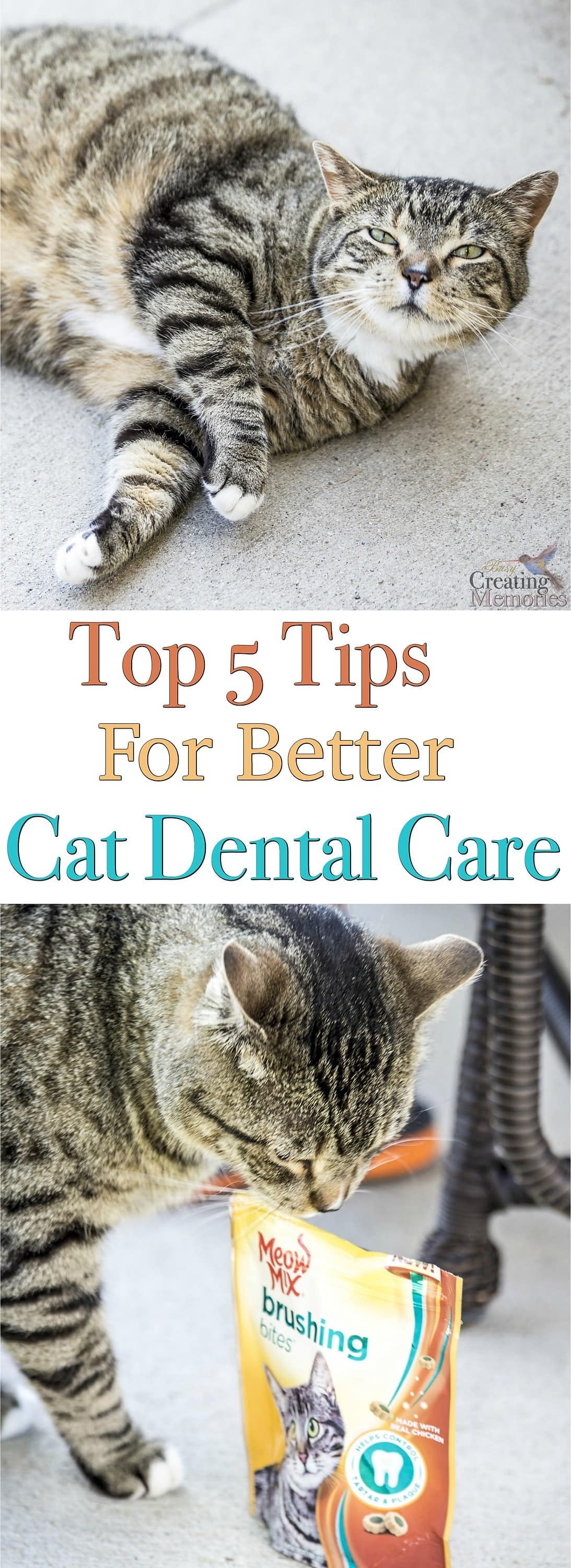 Ensure your cat has the best! Cat Dental Care affects their health. Follow these top 5 tips to ensure a happy and healthy furry friend.