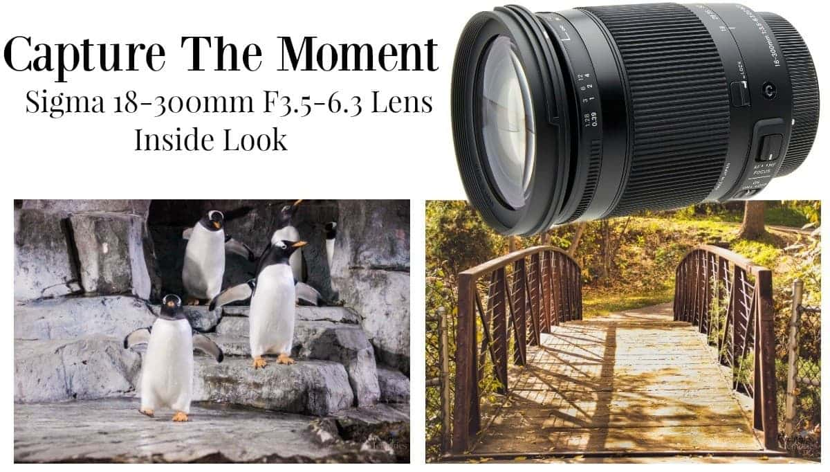 Capture the Moment with Sigma