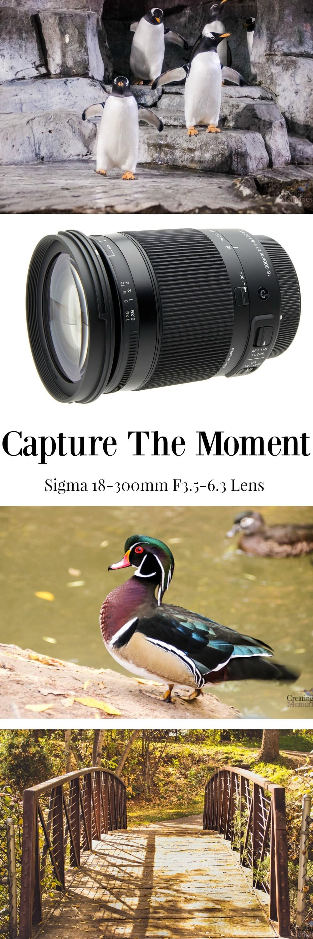 Don't miss the meaningful moments because you were unprepared! Discover how to capture the moment with the Sigma 18-300mm lens for all family events