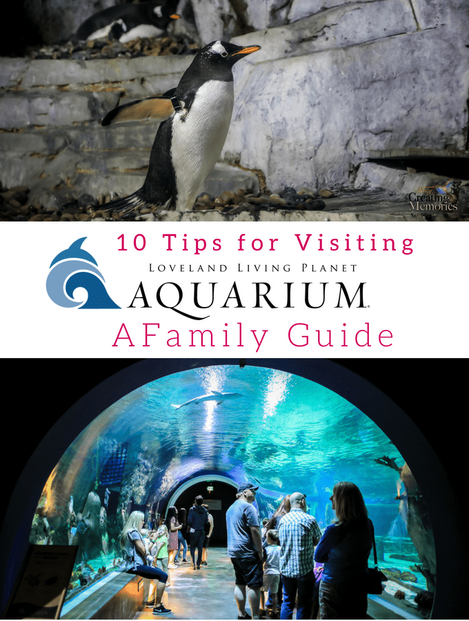Family Guide for visiting the Loveland Living Planet Aquarium