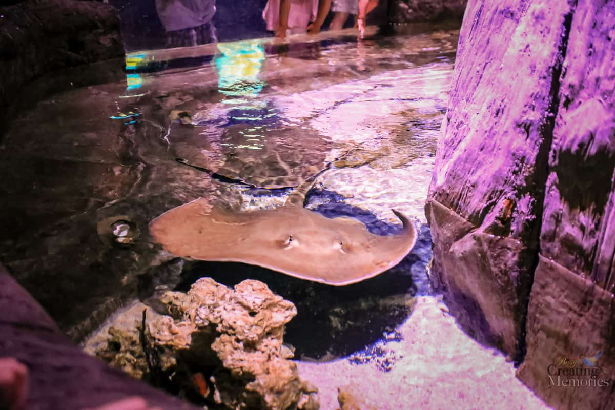 Top 10 tips for visiting the Loveland Living Planet Aquarium A Family Guide