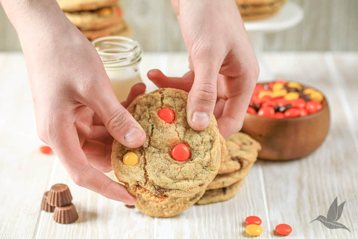 hands pulling apart a chewy chocolate chip cookie