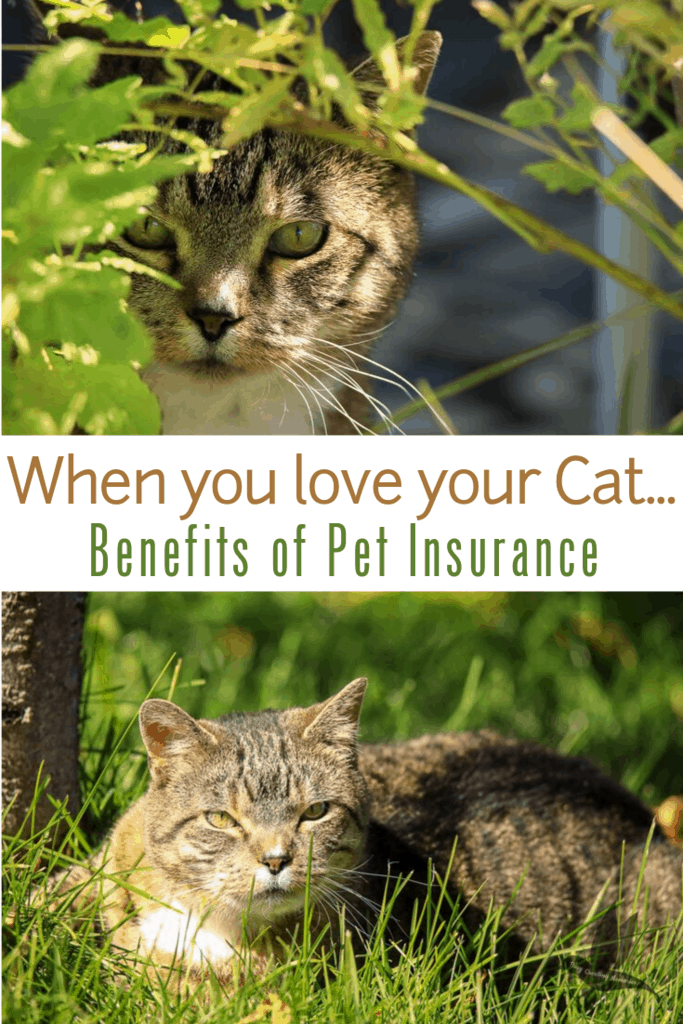 Is your cat\'s health important to you? When your fur baby is a treasured member of the family, you want the very best for their health. Discover why Nationwide Pet Insurance is the most comprehensive pet health plan on the market. And enter to win the Ultimate Zoo Experience just for requesting a free quote! #JungleCats2019
